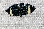 Butterfly World-7601