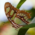 Butterfly World-7650